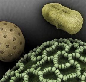 alergeni-polena-12